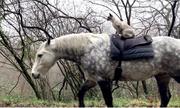Mèo cưỡi ngựa đi dạo quanh thị trấn