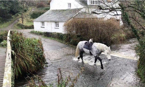 Mèo cưỡi ngựa băng qua một khe nước nhỏ trong thị trấn. Ảnh:Caters News.