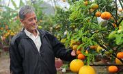 Lão nông ghép 11 loại quả trên cây bưởi, kiếm hơn nửa tỷ một năm
