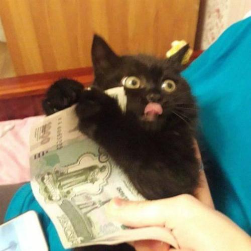 Con mèo tham tiền nhất hành tinh.