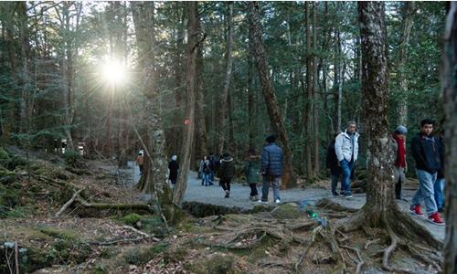 Du khách đi lại trên con đường trong rừngAokigahara. Ảnh: NYTimes.