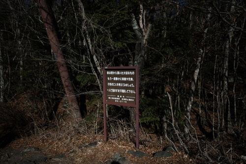 Tấm biển có dòng chữMạng sống là điều quý báu mà cha mẹ đã trao cho bạn ở rừngAokigahara. Ảnh: NYTimes.