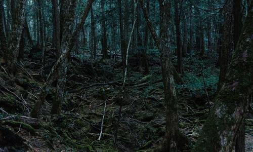 Rừng Aokigahara tạiYamanashi, Nhật. Ảnh: NYTimes.