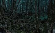 Khu rừng tự sát ở Nhật