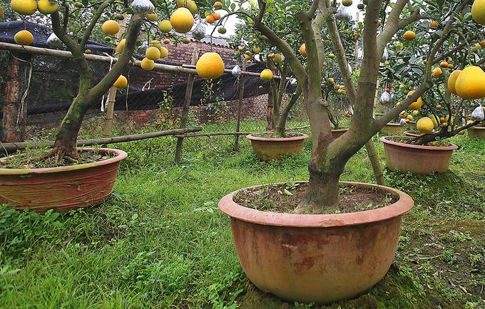 Nông dân trồng cây 11 loại quả bán dịp Tết