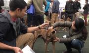 200 chú chó bản địa tranh tài ở Hà Nội