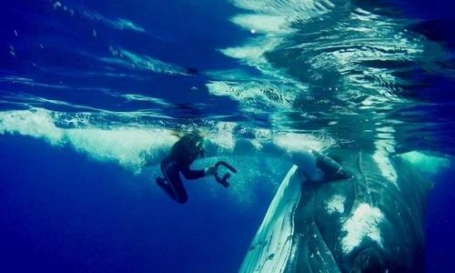 Con cá voi lưng gù cứu mạng Hauser. Ảnh: Caters.
