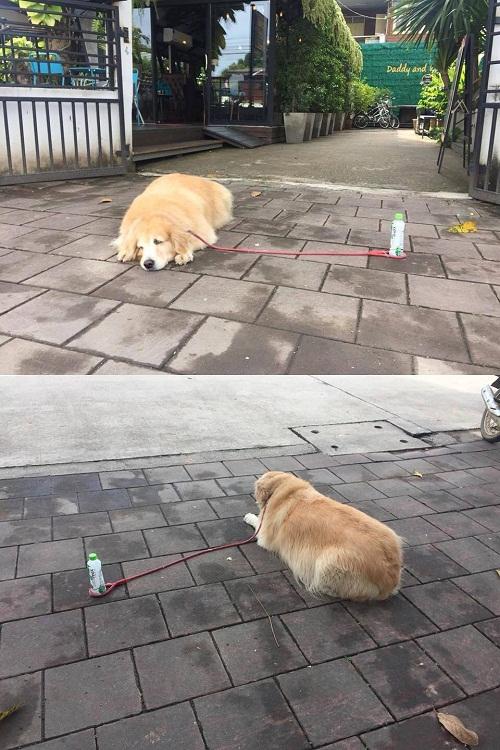 Logic của cún cưng.