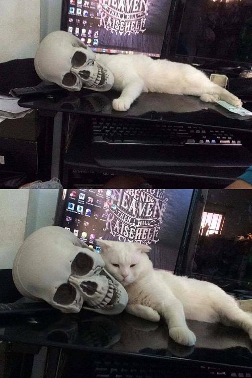 Chiếc gối độc nhất vô nhị của mèo.