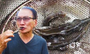 Người Sài Gòn thích thú ăn rắn mối, bò cạp
