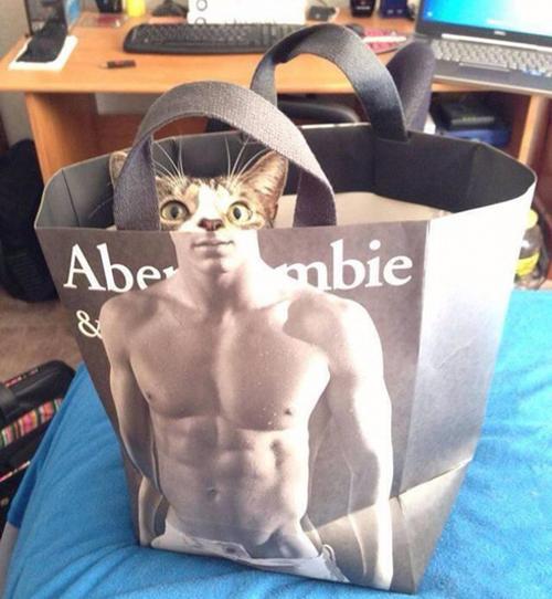 Chú mèo 6 múi chăng?