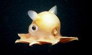 Những sinh vật kỳ dị nhất dưới đáy biển sâu