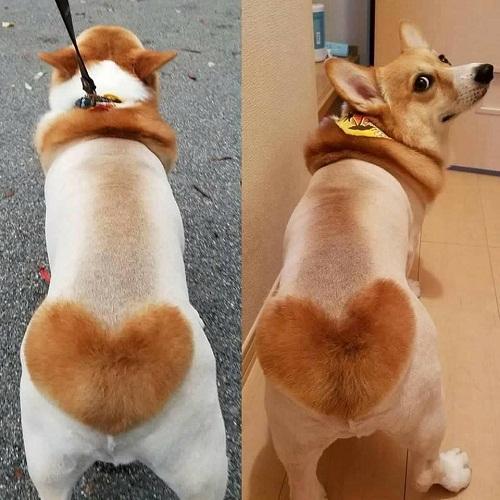 Mốt lông yêu thương cho cún cưng.