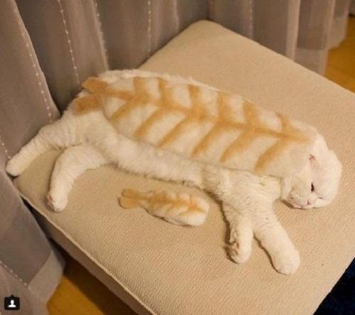 Sushi cá mèo.