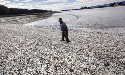 Các vùng chết ở đại dương tăng lên gấp 4 lần