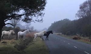 Đàn ngựa đứng suốt đêm canh xác đồng loại