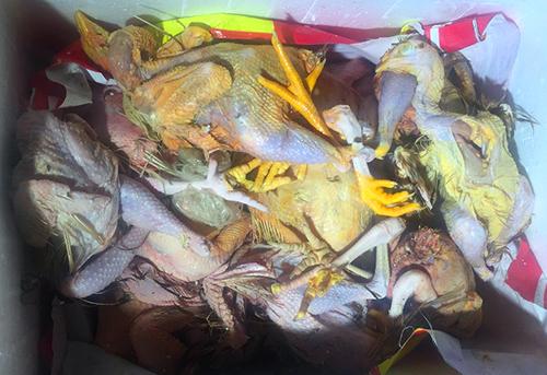 Thịt gà bốc mùi được cảnh sát lập biên bản tịch thu để tiêu hủy. Ảnh: Cẩm Hà