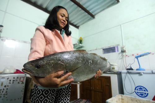 Con cá chồng chị Sự bắt được ghi giống cá sủ vàng. Ảnh: Đắc Thành.