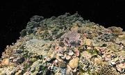 Bản đồ 3D chi tiết nhất của rạn san hô