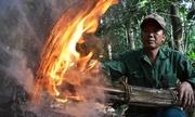 Thui lửa thân cây lấy dầu rái ở Quảng Ngãi