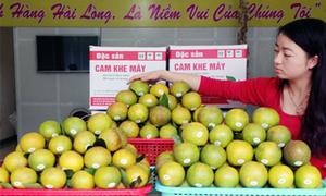 250 ha cam Khe Mây trồng theo phương pháp sinh học