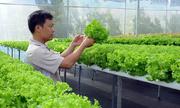 Nông trại rau xà lách sạch ăn được ngay tại vườn