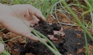 Công thức tự chế phân bón hữu cơ của nhà nông