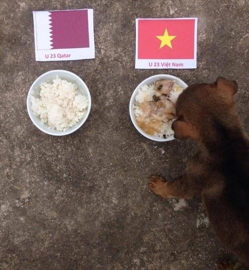 Chó thần dự đoán trận bán kết U23 Qatar và U23 Việt Nam.