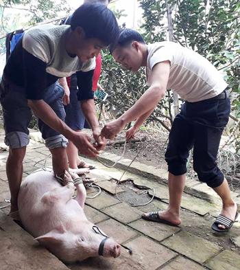 Gia đình thủ môn Tiến Dũng mổ lợn khao làng. Ảnh: Lam Sơn.