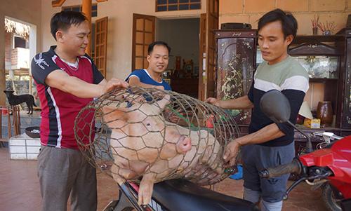 Gia đình ông Khánh sẽ mổ lợn khao làng trong trận đấu cuối của U23 Việt Nam. Ảnh: Lam Sơn.