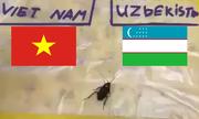 'Gián thần' gặp nạn vì chọn U23 Uzbekistan vô địch