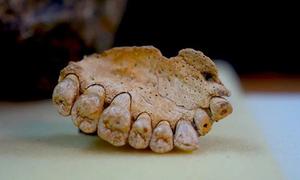 Phát hiện hóa thạch người hiện đại lâu đời nhất ngoài châu Phi
