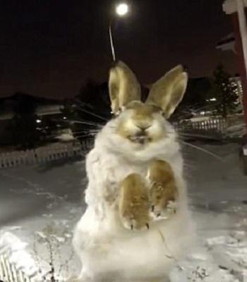 Xác thỏ đóng băng được kéo ra khỏi hàng rào. Ảnh: Twitter.