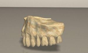 Hóa thạch xương hàm có thể là hài cốt người cổ xưa nhất