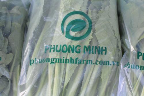 Rau sau khi thu hoạch được đựng trong túi GreenMAP, giúp bảo quản lâu hơn
