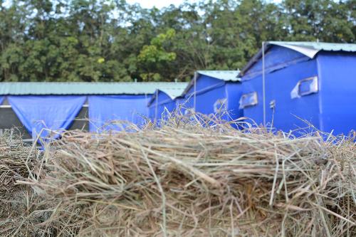 Nhà nấm tại trang trại