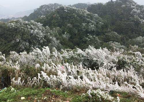 Băng phủ kín đỉnh núi Mẫu Sơn ngày 29-31/1. Ảnh: Vi Văn Phúc