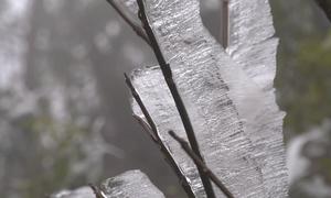 Cây cối đóng băng ở Mù Cang Chải
