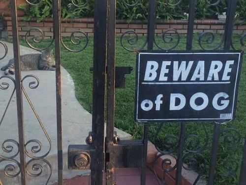 Coi chừng chó dữ.