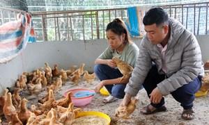 Sinh viên tặng gà giống cho đồng bào vùng cao