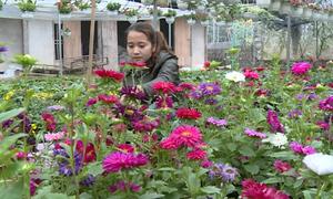 Vườn hoa 100 loại của cựu sinh viên trường nông nghiệp