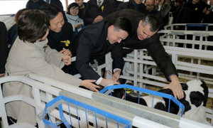 Tập đoàn TH vận hành trang trại bò sữa đầu tiên tại Nga