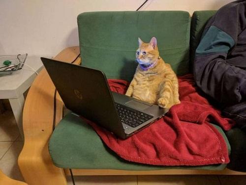 Mèo thời hiện đại.
