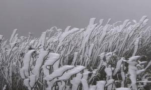 Mù Cang Chải bị tàn phá bởi băng giá