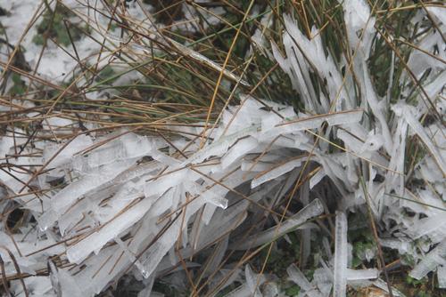 Băng xuất hiện nhiều ngày ở Mù Cang Chải (Yên Bái) làm hỏng thảm thực vật. Ảnh: Giàng A Lù