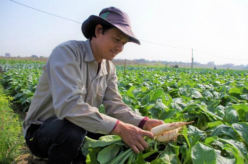 Anh Phạm Hoàng Hiệp chăm sóc kỹ từng luống rau. Ảnh: NVCC