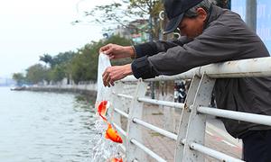 Hà Nội cử người trực ở hồ Tây để hướng dẫn thả cá chép