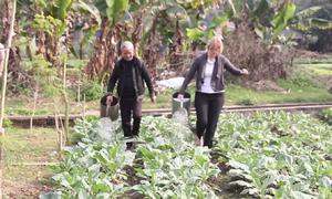 Đại sứ New Zealand thu hoạch rau cùng người khuyết tật ở Hà Nội