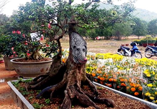 Cây khế có hình dáng chú chó được trưng bày ở chợ hoa xuất Mậu Tuất. Ảnh: Phú Quốc.