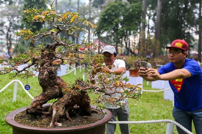Những cây mai tiền tỷ ở hội hoa xuân lớn nhất TP HCM